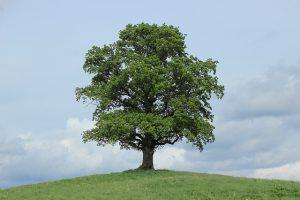 tree-773736_640